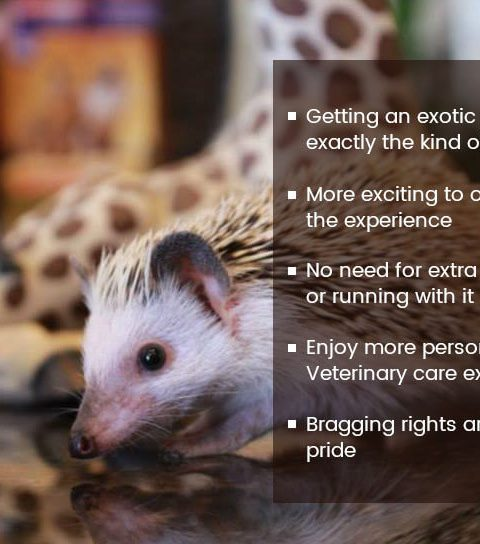 Benefits of Having Exotic Pets