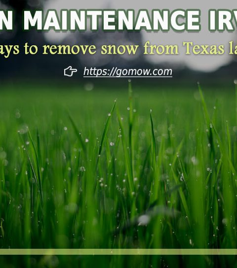 Lawn Maintenance Irving - Ways to remove snow from Texas lawns