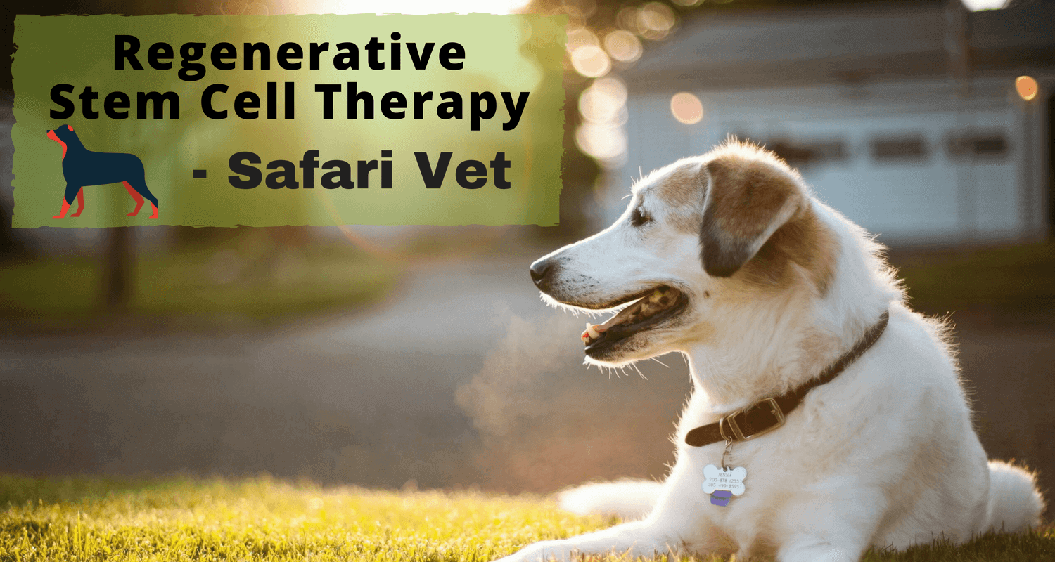 Stem Cell Therapy for Your Pet