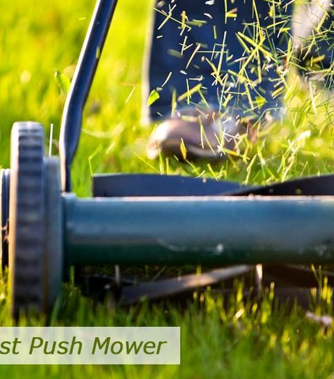1800clicks - Main things to consider when buying a push mower