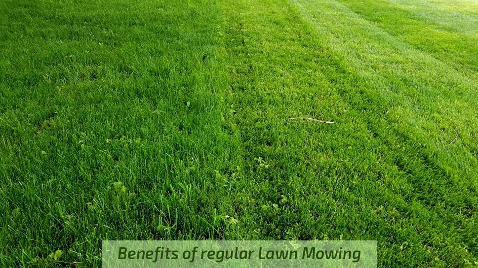Benefits-of-regular-Lawn-Mowing