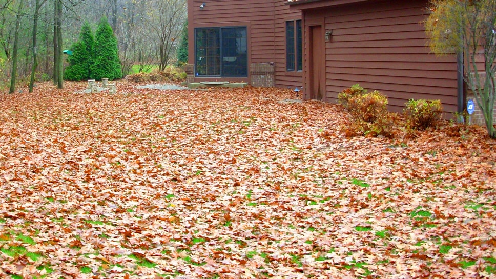 Best-ways-to-clean-up-leaves