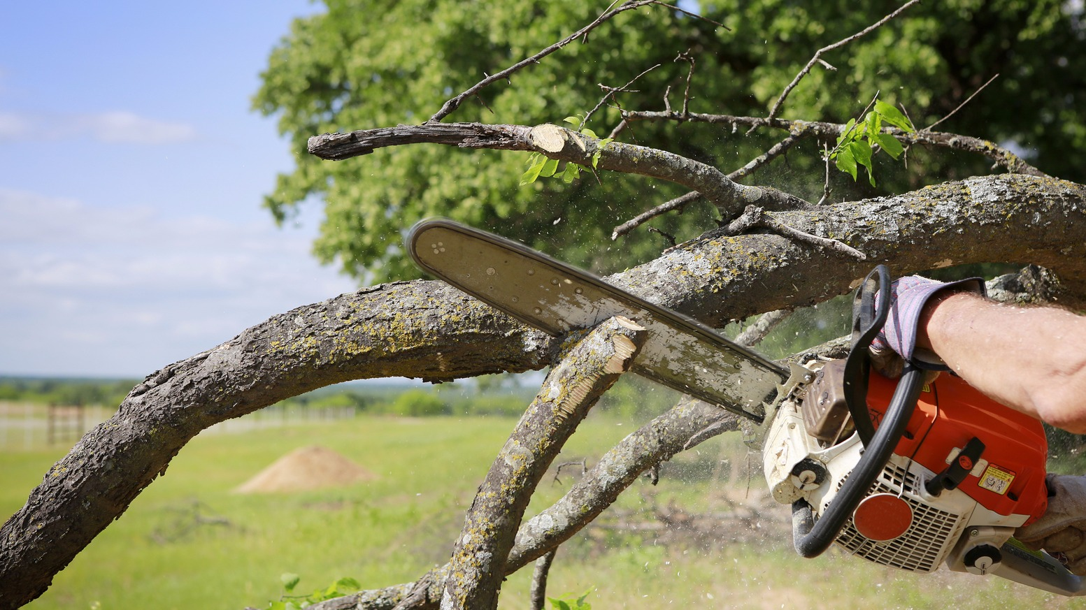 Few Crucial Factors To Keep In Mind While Tree Removal