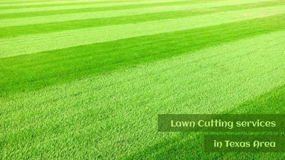 1800clicks - Easy ways to find superior lawn cutting services in Texas areas