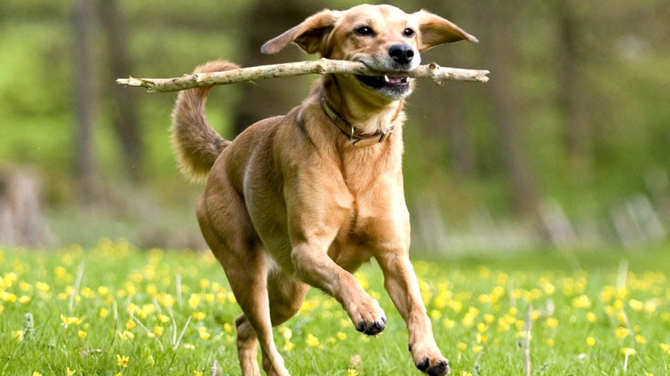 Ensure that your Pet is having healthy and happy life