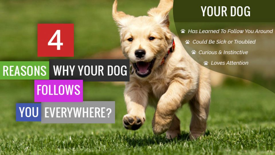 4Reasons-Why_YourDog_Follows_You_Everywhere