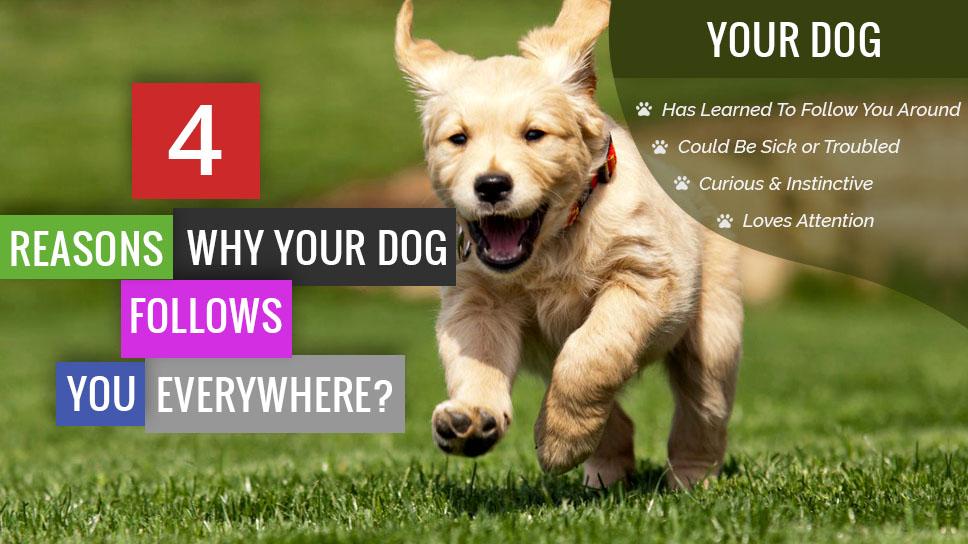 4Reasons-Why_YourDog_Follows_You_Everywhere