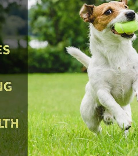Follow these Daily activities for improving your pet's health