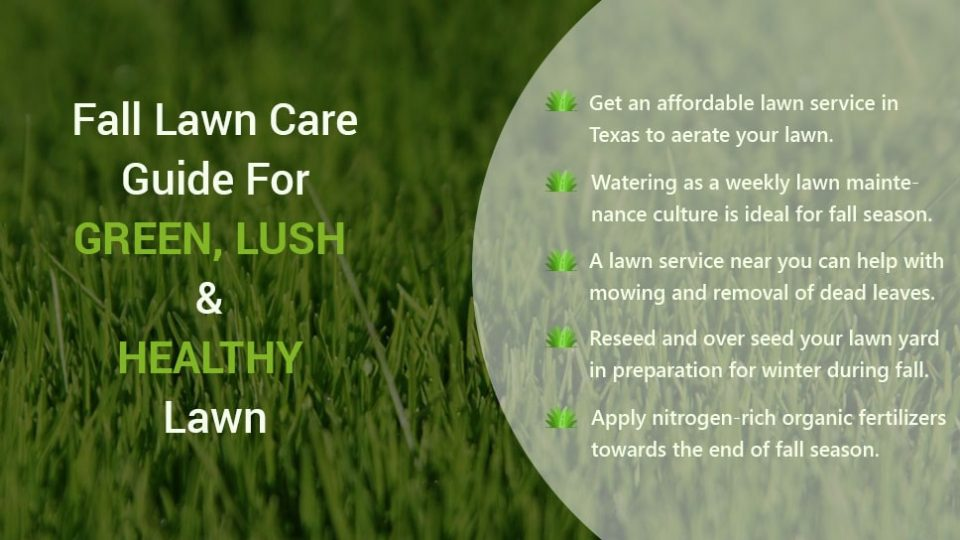 Texas Lawn Care Guide for green, lush and healthy lawn in Fall