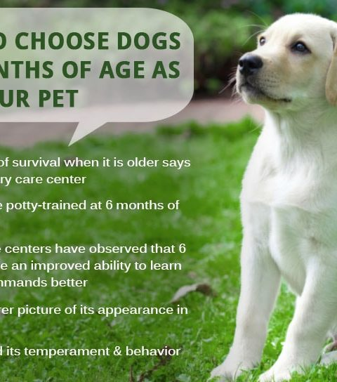choose-Dogs-over-6months-age