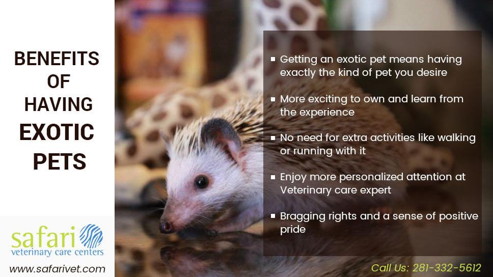 Benefits of Having Exotic Pets