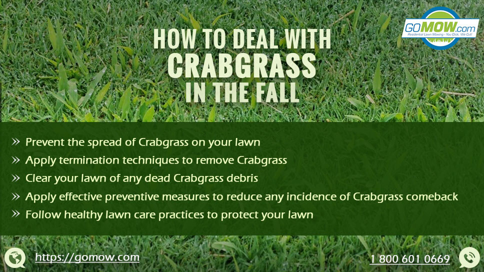 How to deal with crabgrass in the Fall