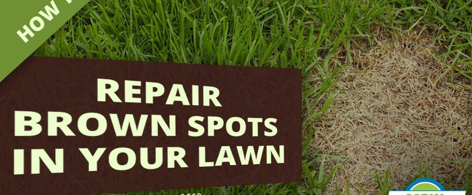 How to repair brown spots in your lawn
