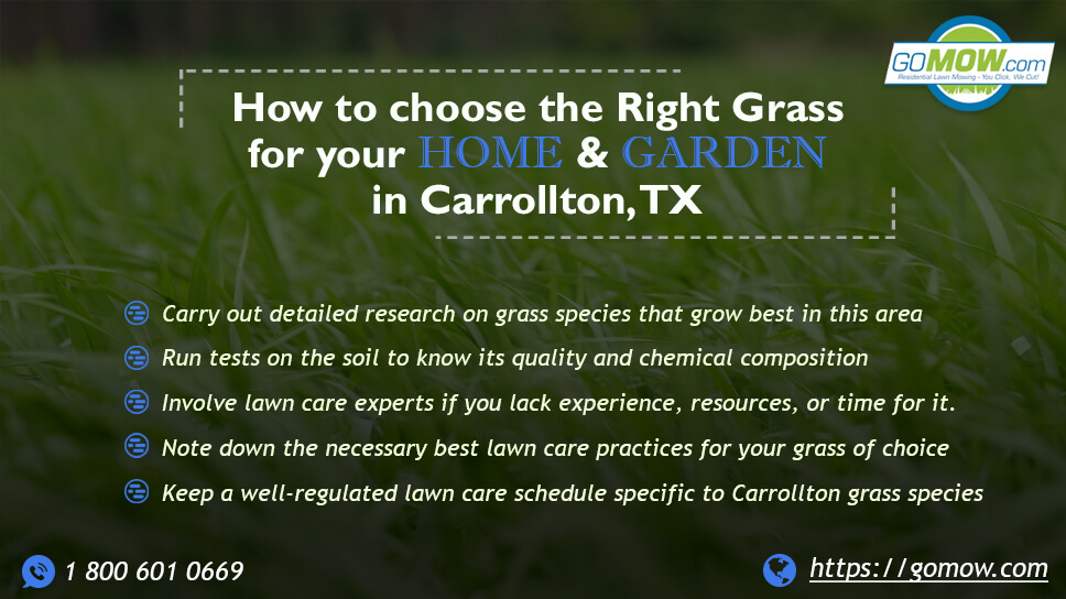 How to choose the right grass for your home & garden in Carrollton, TX