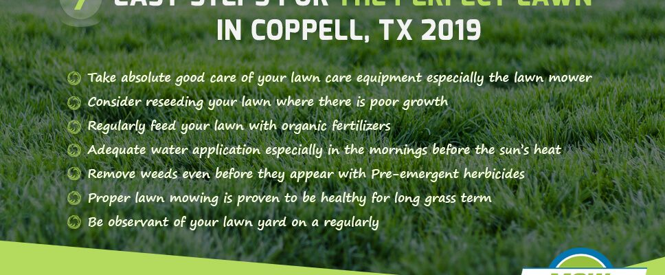 7 Easy steps for the perfect lawn in Coppell, TX 2019