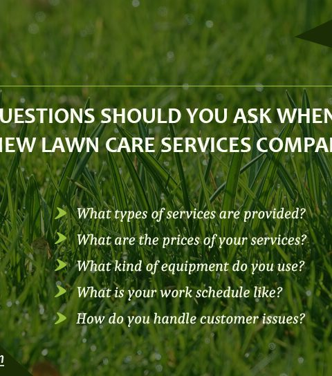 What questions should you ask when hiring a new lawn care Services Company