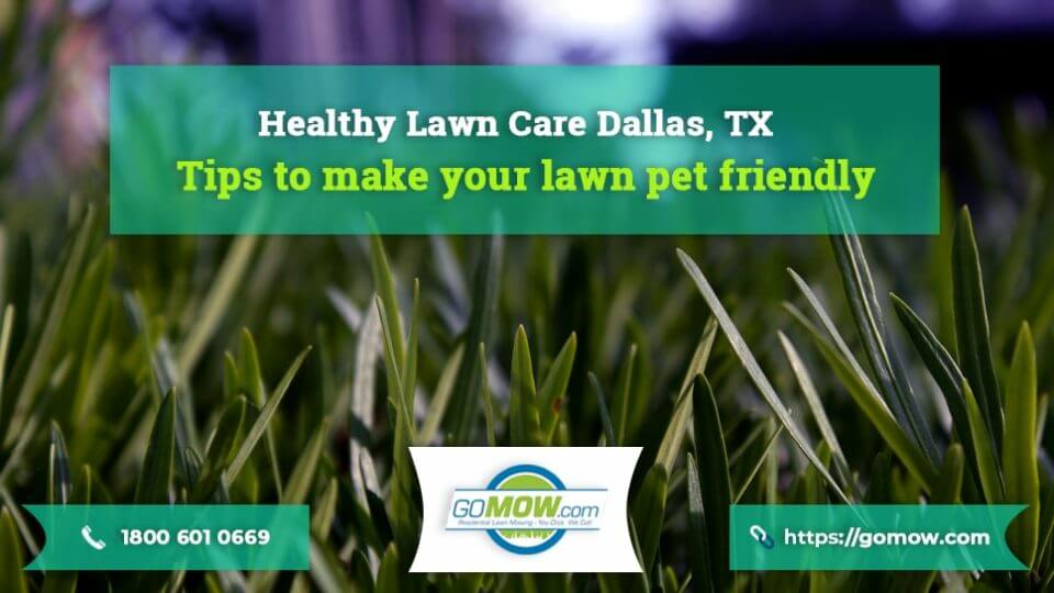 Healthy-Lawn-Care-Dallas,-TX-–-Tips-to-make-your-lawn-pet-friendly