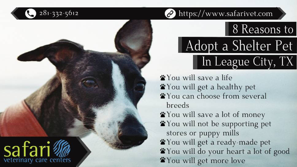 8 Reasons to Adopt a Shelter Pet in League City, TX