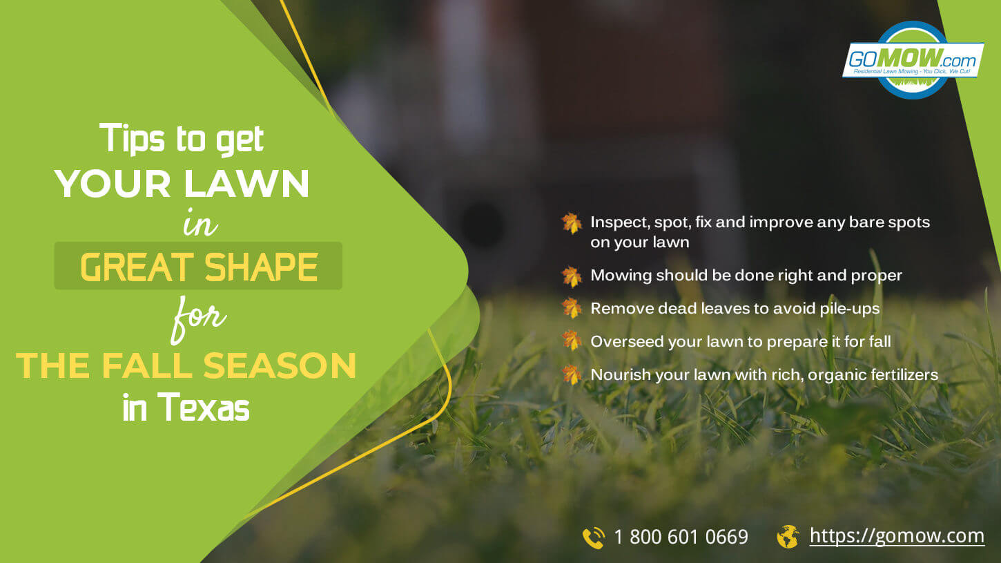 Tips to get your lawn in great shape for the fall season in Texas
