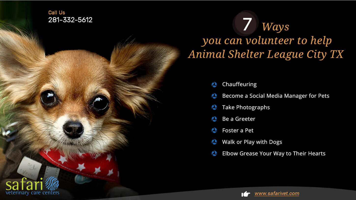 7 Ways you can volunteer to help Animal Shelter League City TX