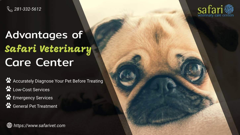 Advantages of Safari Veterinary Care Center