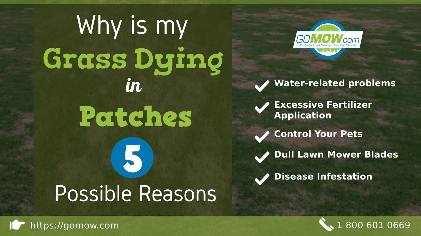 Why is my grass dying in patches - 5 Possible Reasons-min