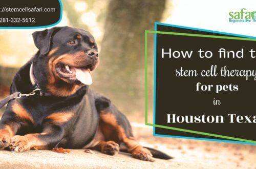 How to find the stem cell therapy for pets in Houston Texas