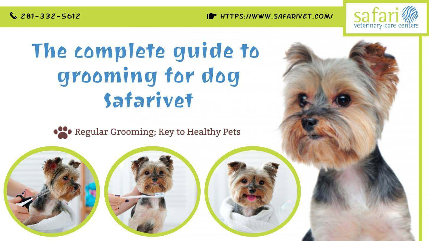 The complete guide to grooming for dog – Safarivet