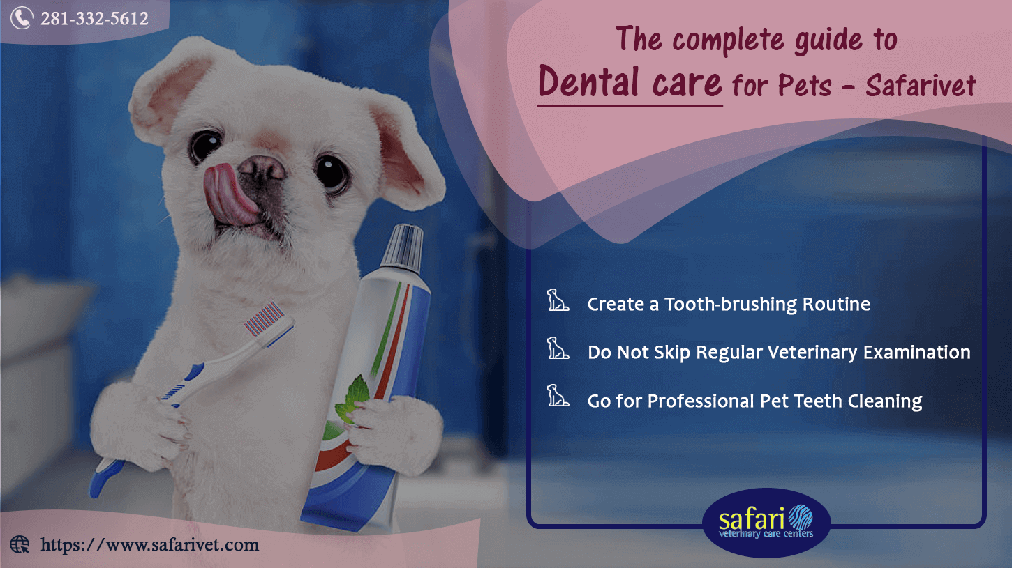 The Complete Guide to Dental Care for Pets