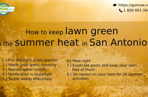 How to keep lawn green in the summer heat in San Antonio