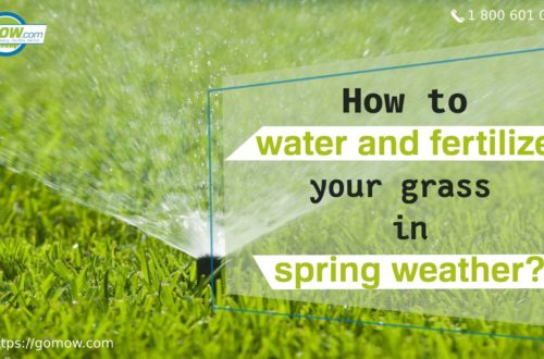 How to water and fertilize your grass in spring weather