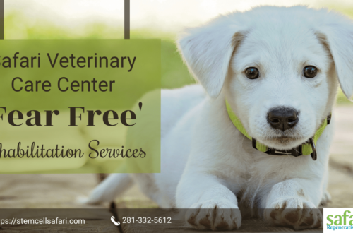 Safari Veterinary Care Center - 'Fear Free' Rehabilitation Services