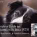 Complete Guide to Keratoconjunctivitis Sicca (KCS) - Symptoms, Breed Specific, Stem Cell Treatment-min