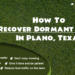 How To Recover Dormant Grass In Plano, Texas-min