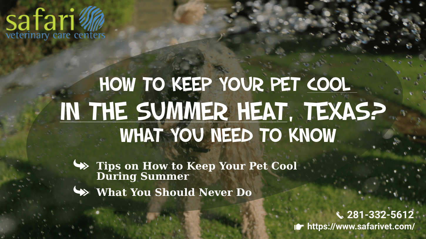 How to keep your pet cool in the Summer heat, Texas What you need to know-min