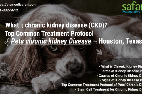 What is chronic kidney disease (CKD) Top Common Treatment Protocol of Pets chronic kidney Disease in Houston, Texas-min
