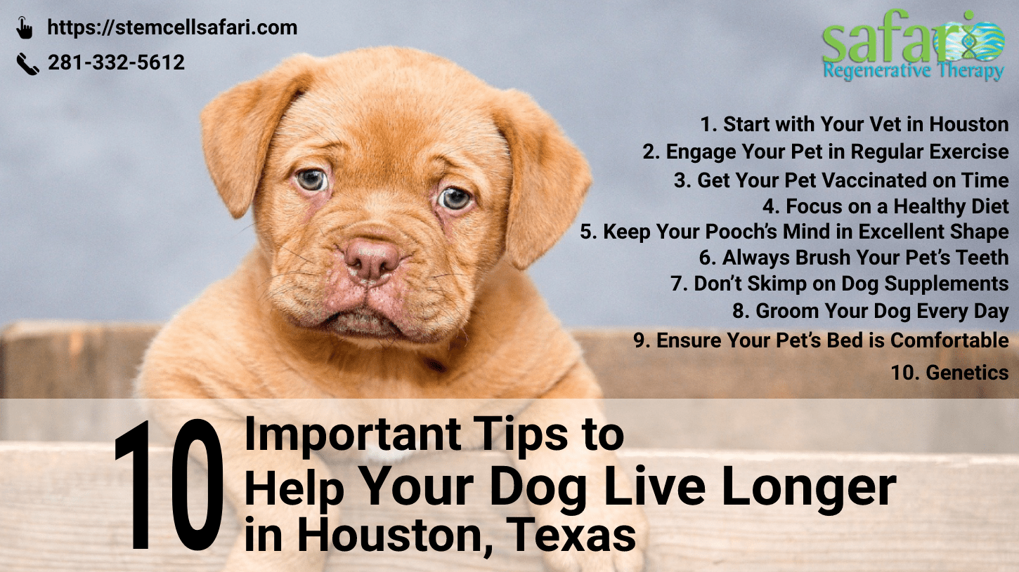 10 Important Tips to Help Your Dog Live Longer in Houston, Texas-min