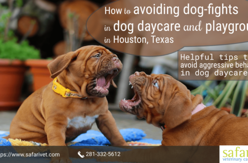 How to avoiding dog-fights in dog daycare and playgroups in Houston, Texas-min