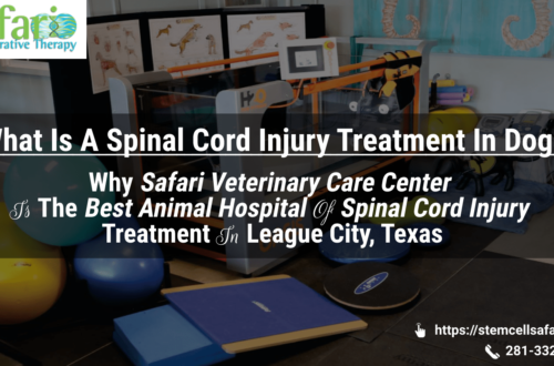 What Is A Spinal Cord Injury Treatment In Dogs Why Safari Veterinary Care Center Is The Best Animal Hospital Of Spinal Cord Injury Treatment In League City, Texas-min