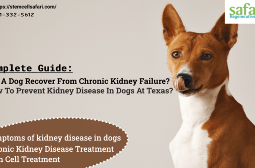Complete Guide Can A Dog Recover From Chronic Kidney Failure How To Prevent Kidney Disease In Dogs At Texas-min