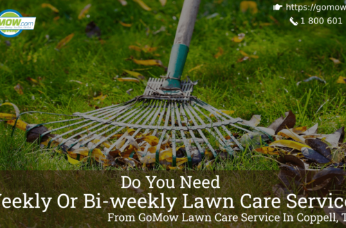 Do You Need Weekly Or Bi-weekly Lawn Care Services From GoMow Lawn Care Service In Coppell, TX -min