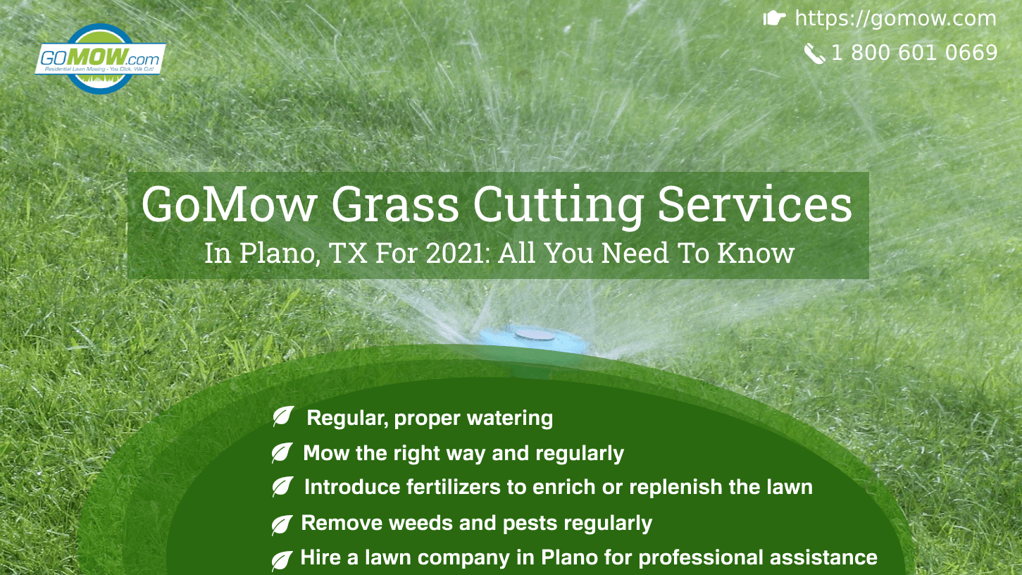 GoMow Grass Cutting Services In Plano, TX For 2021 All You Need To Know-min
