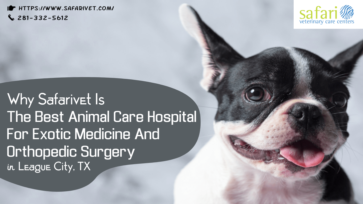 Why Safarivet Is The Best Animal Care Hospital For Exotic Medicine And Orthopedic Surgery In League City, TX-min